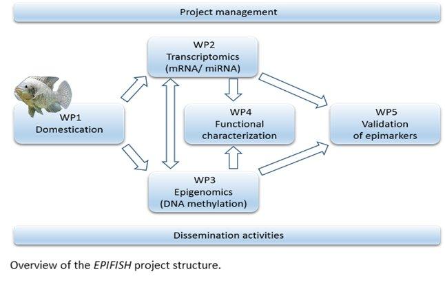 EPIFISH Pert.png